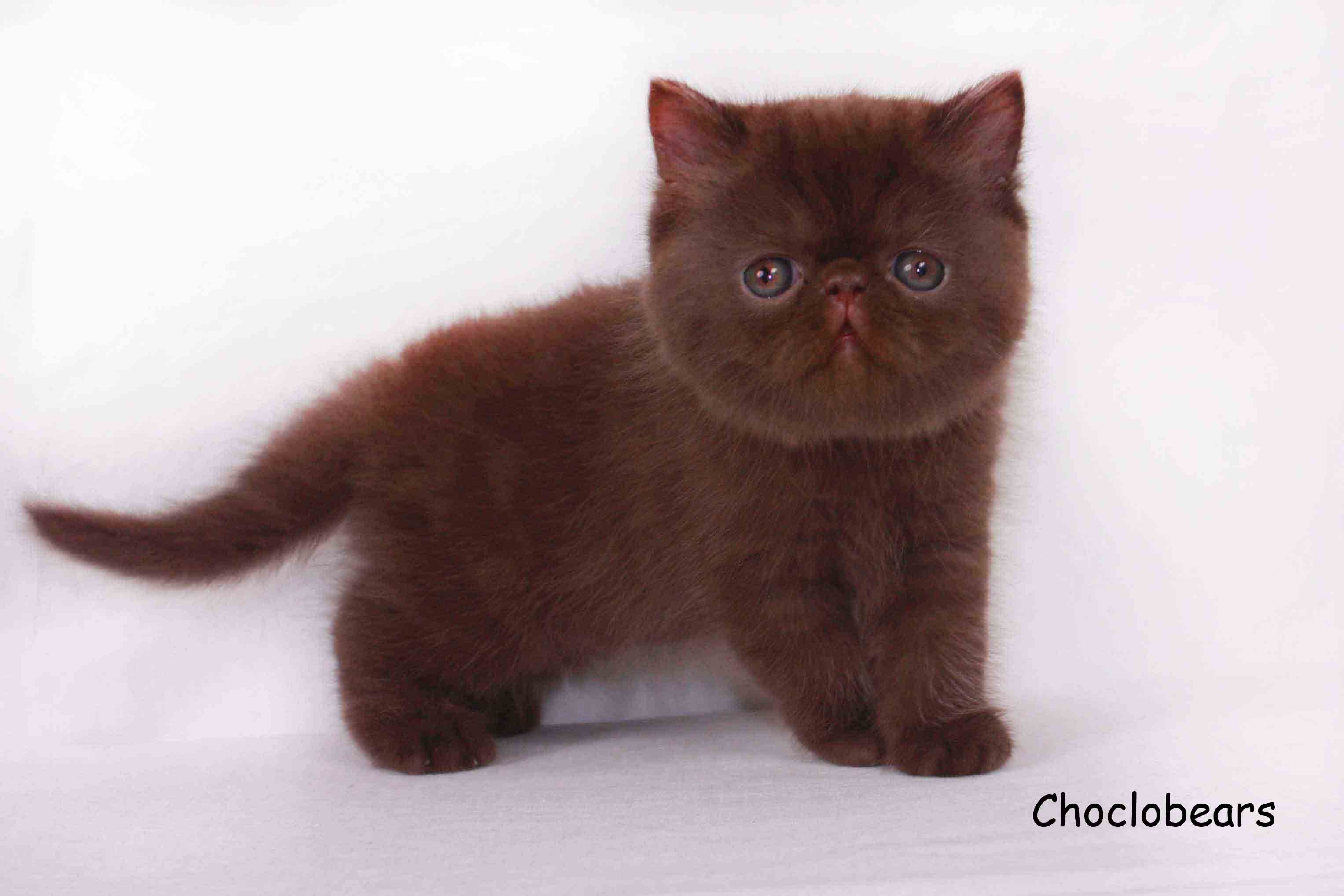 Pin On Persian Cats Guide