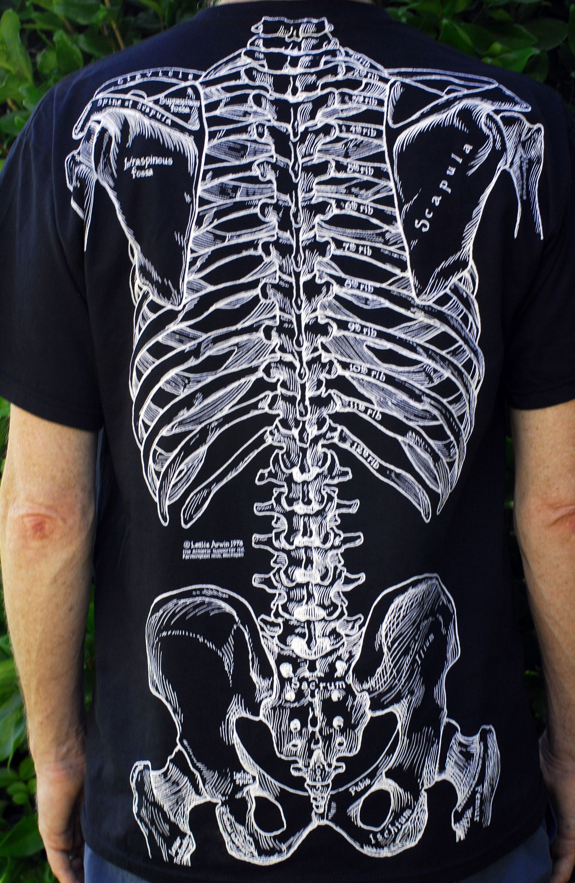 anatomy t-shirt muscles - Google Search | Camisetas com Anatomia in ...