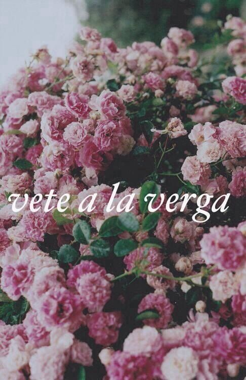 Spanish Quotes Pretty Flowers Planting Flowers Love Flowers