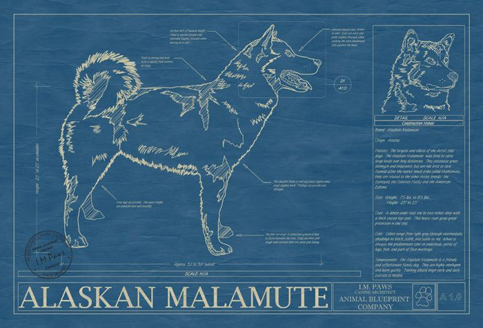 Dog blueprints of course my style pinterest malamute dog dog blueprints of course malvernweather Gallery