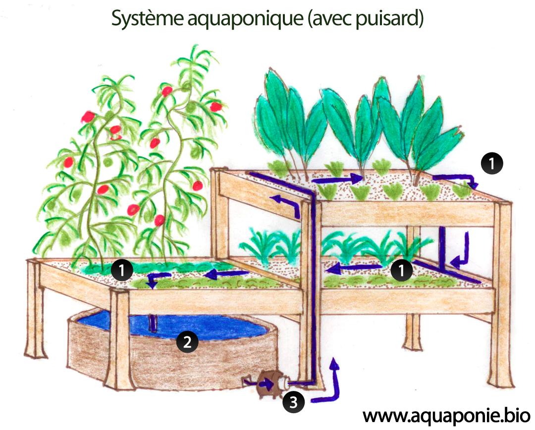 Schema composants aquaponie garden pinterest for Jardin hydroponique