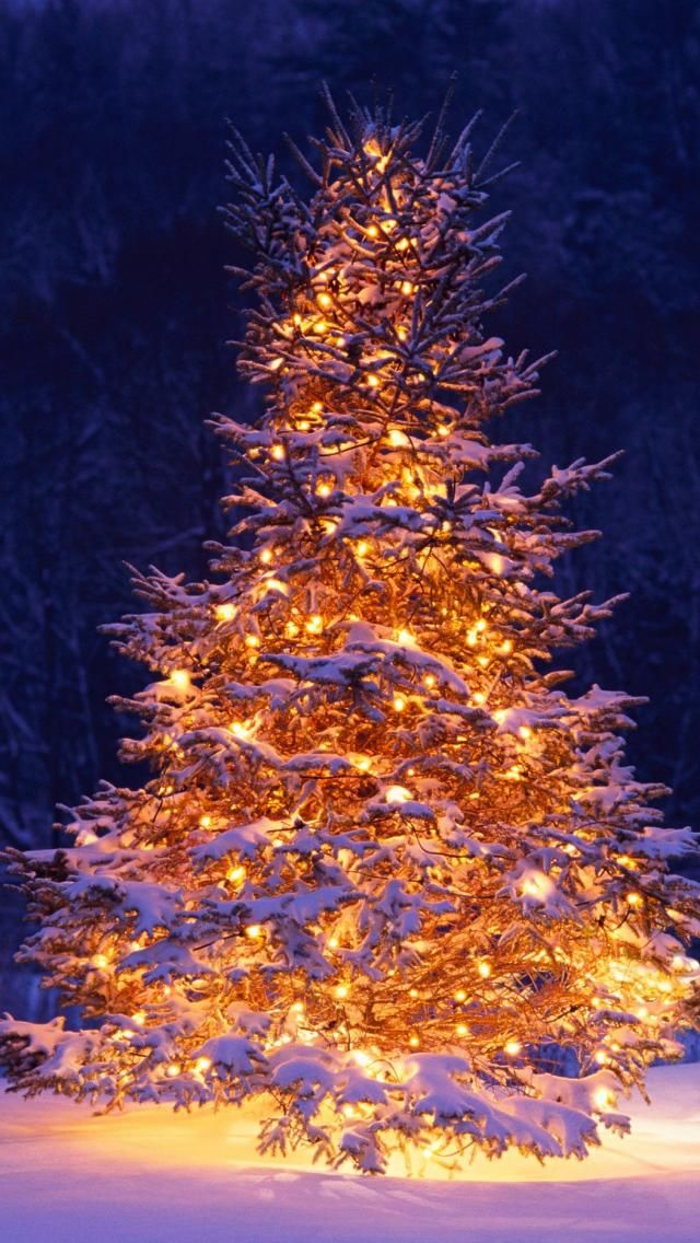 Christmas Decoration Ideas Marry Christmas Wallpaper Wallpaper Iphone Christmas Christmas Tree Wallpaper