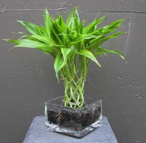Bamboo Arrangements1 Indoor