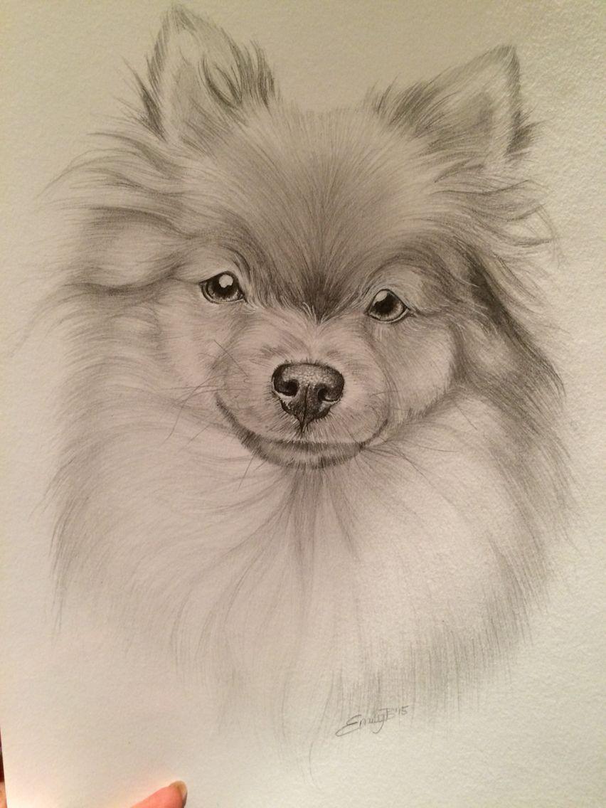 Pencil Drawing Pomeranian My Work Pencil Drawings