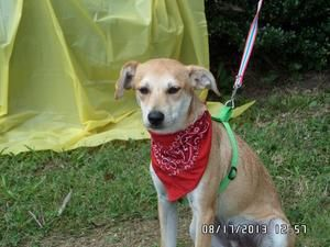Adopt Tank Pending Adoption On Dogs I Love Dogs Animals