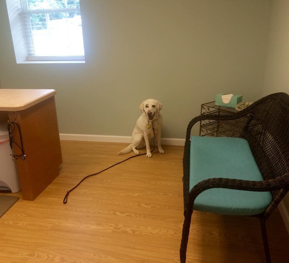 Dog Friendly Room Lab Vet Pet Clinic Animal Hospital Dog Friends
