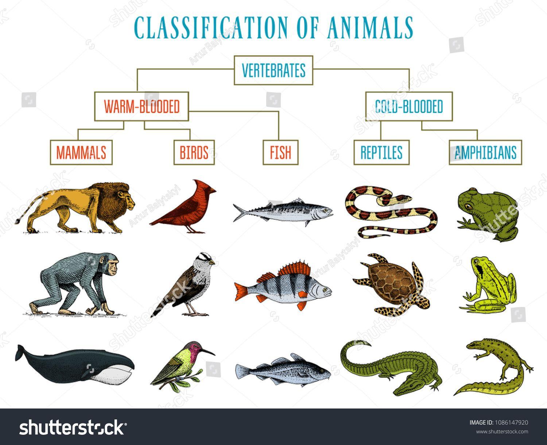 Mammals Vs Reptiles Vs Amphibians