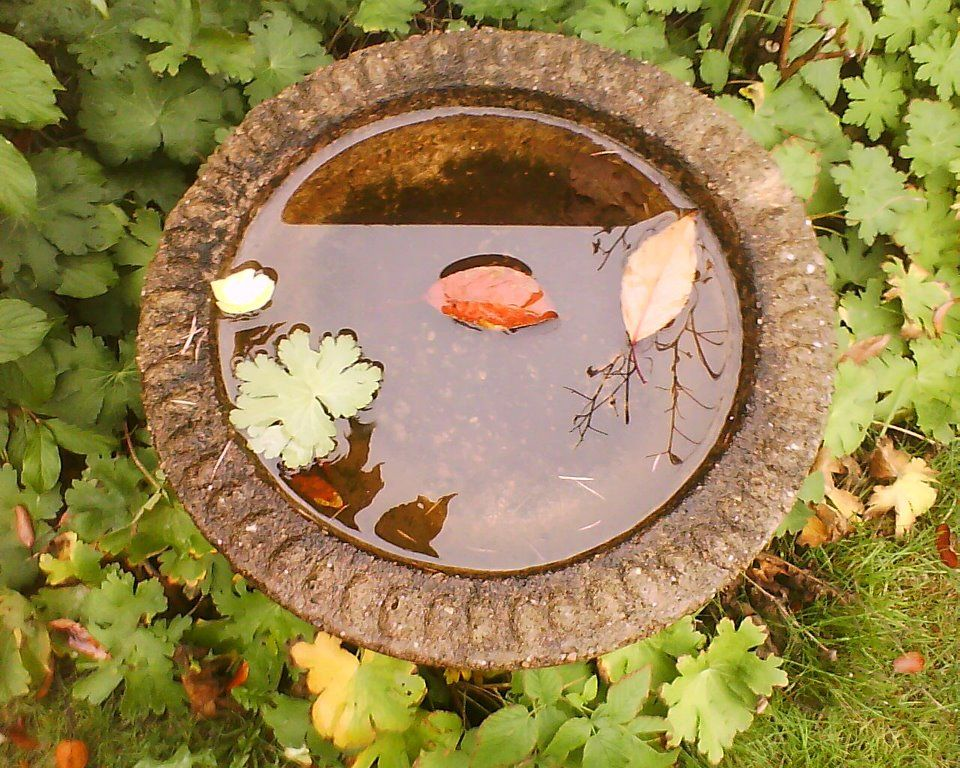 Autumn leaves floating aimlessly in old birdbath.