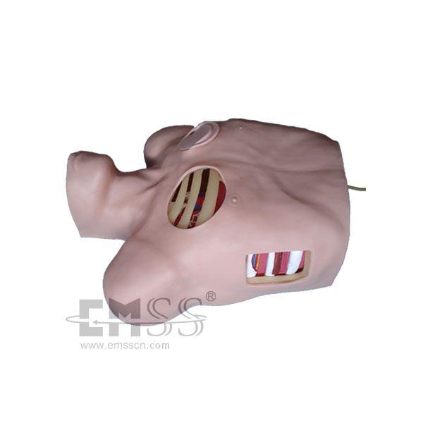 Aliexpress.com : Chirurgische Brust Rohr Intubation trainingsmodell ...