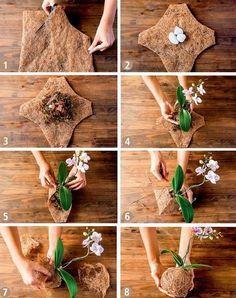 DIY #kokedama Orquidea. Como cuidar