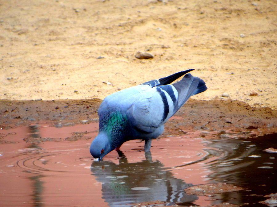 i'm thirsty by Vipin Kohli on 500px #i'mthirsty i'm thirsty by Vipin Kohli on 500px #imthirsty