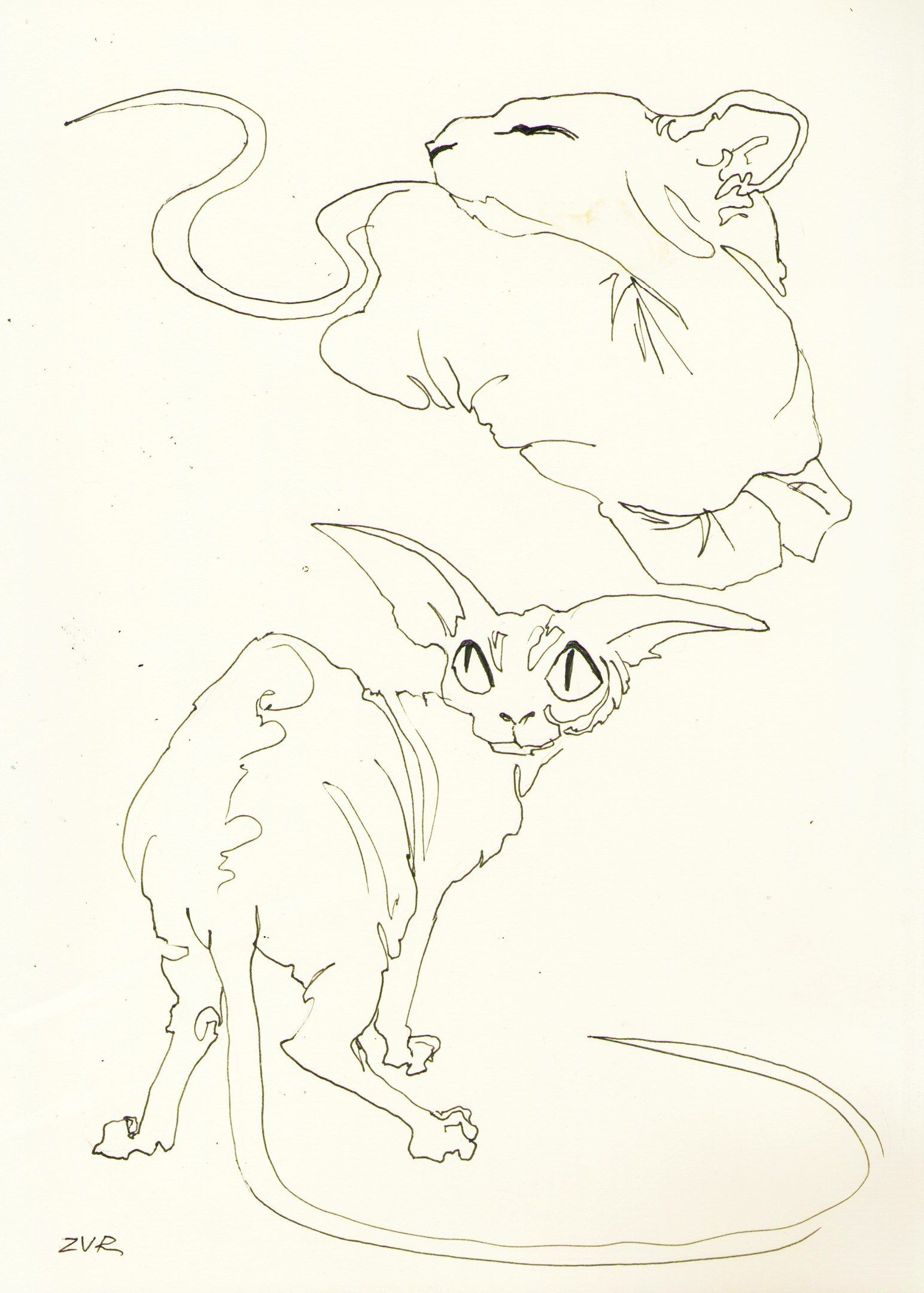 Zavar_art Kitten art, Cat sketch, Animal stencil