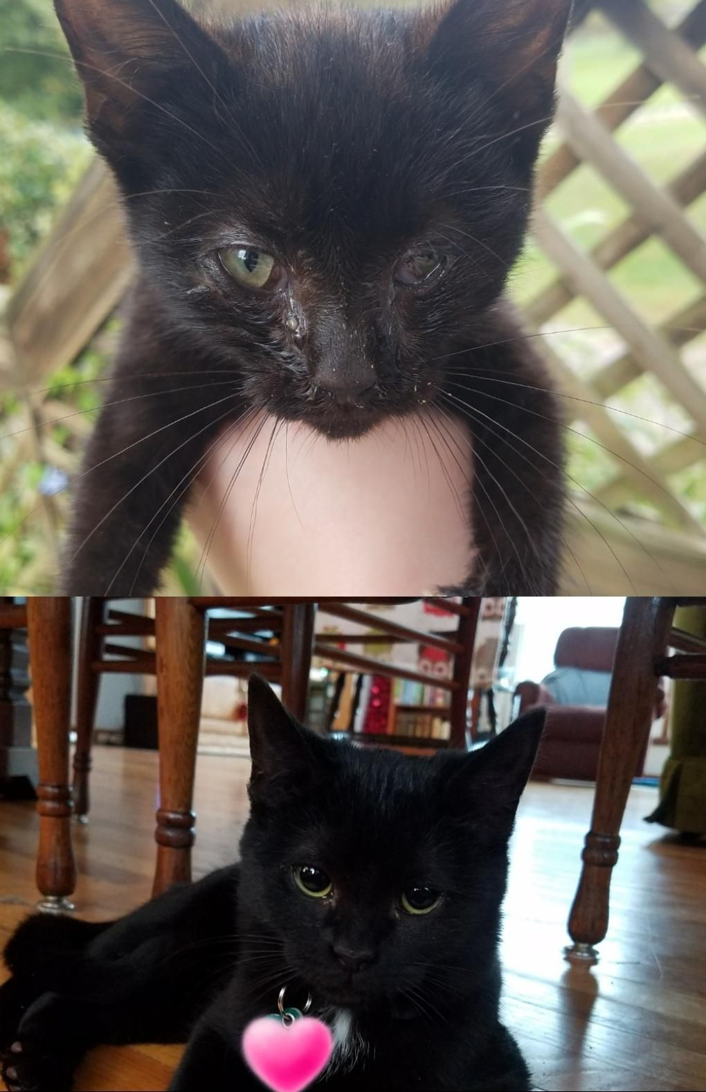 Before And After 6 Months Ago My Batley Was A Scrawny Sickly Stray Now She Is Happy Healthy And Loved I Redd It Submitted By Kittens Cutest Cute Cats Pets