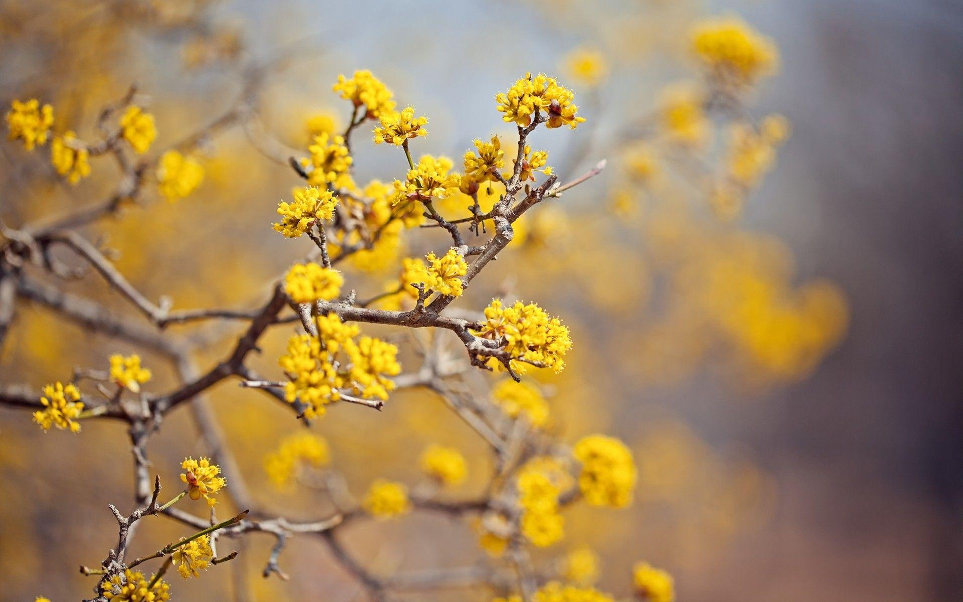 Yellow Flowers Wallpaper 46539 1920x1200 Px Yellow Flower Wallpaper Best Flower Wallpaper Yellow Blossom