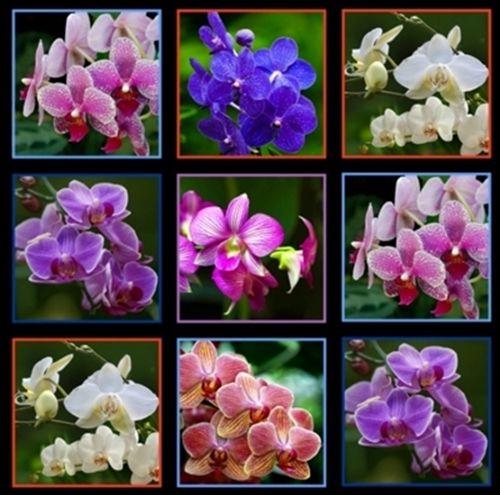 Digital Garden Orchid Flower Blocks 24x44 Large Cotton Fabric Panel