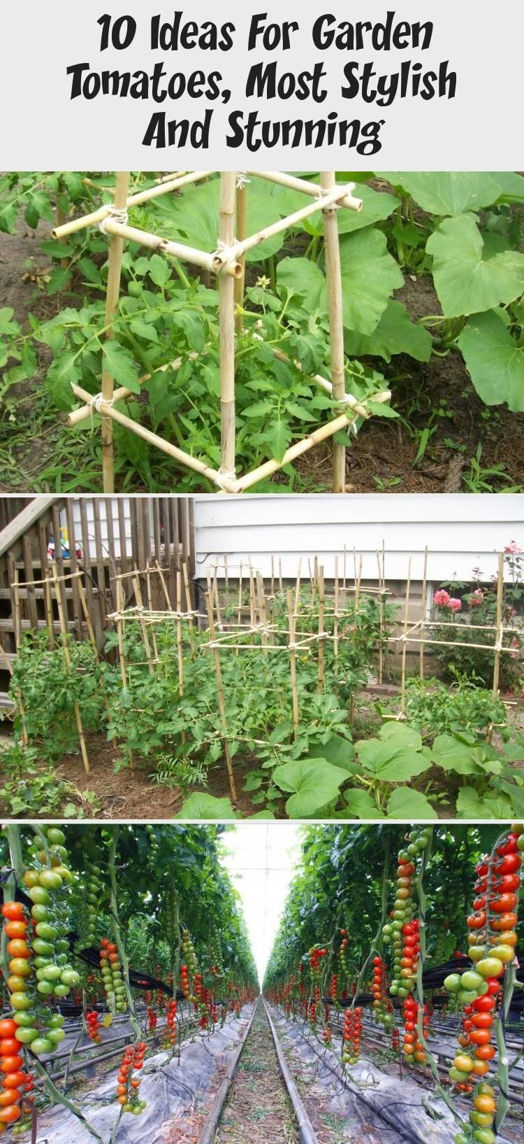 10 Ideas For Garden Tomatoes Most Stylish And Stunning Smallgardenbeds Gardenbedsfurniture Gardenb Tomato Garden Garden Beds Vegetable Garden For Beginners