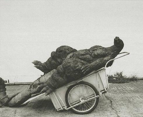Godzilla taking a nap in a wheelbarrow (Behind the Scenes  on Twitter)