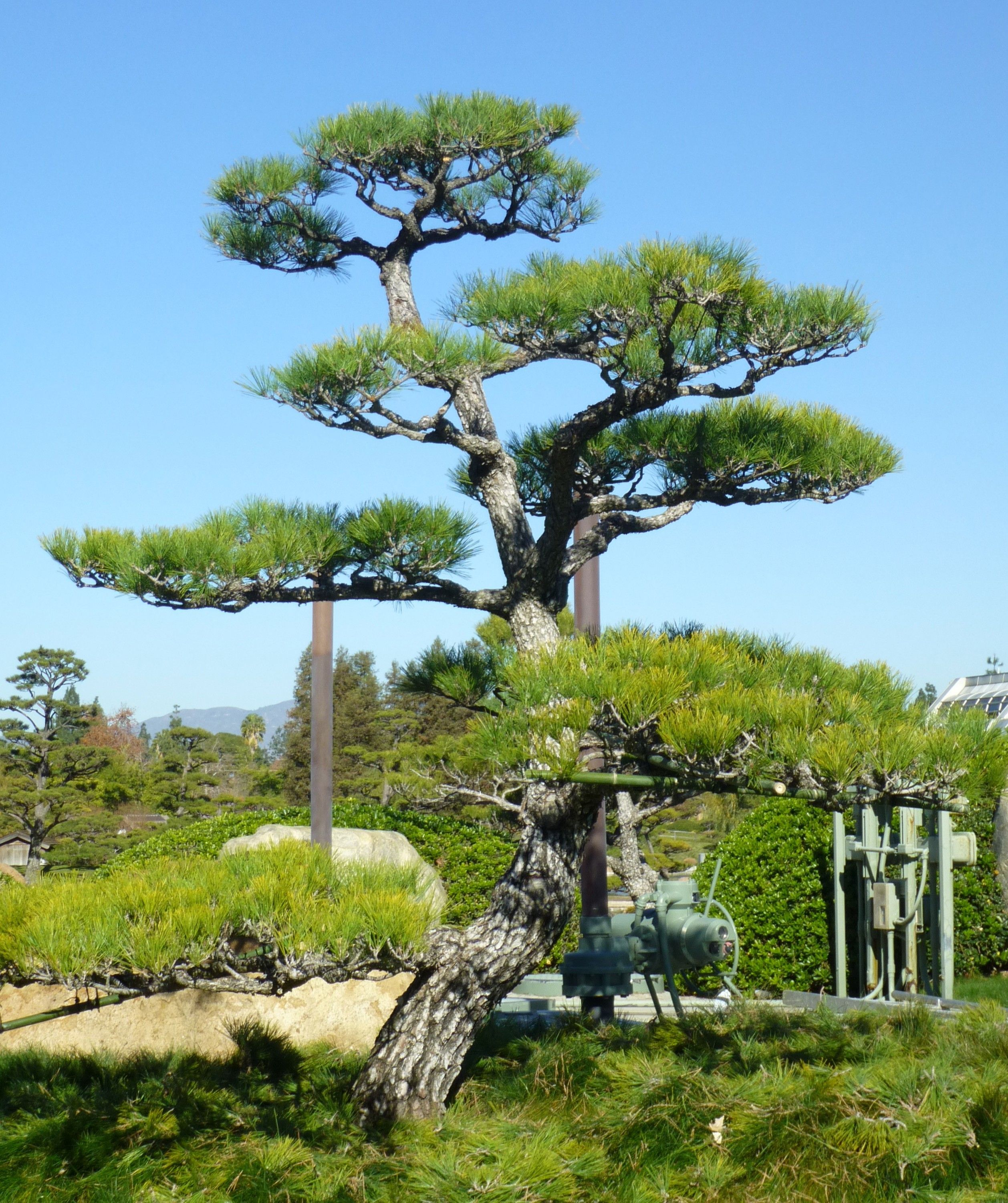 Image Result For Japanese Garden Well