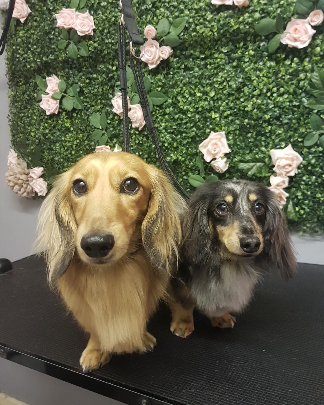 Wednesday We Re Ready For You We Ve Had A Cancellation At 11am Today For Anyone Who Would Like To Book Their Dog In For A Pamper Dogs Pets Golden Retriever