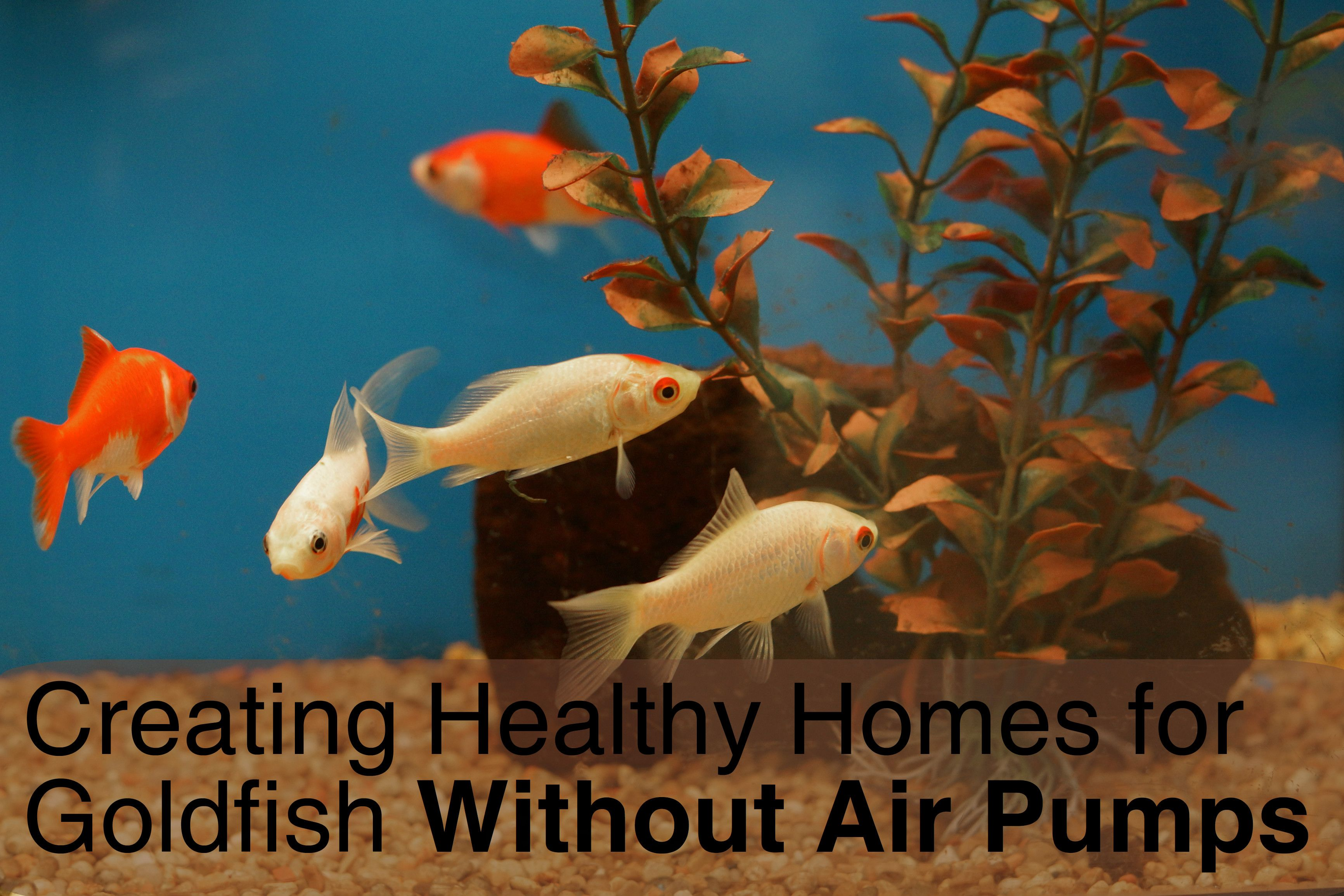 Caring for Your Goldfish in a Fish Bowl Without an Air Pump
