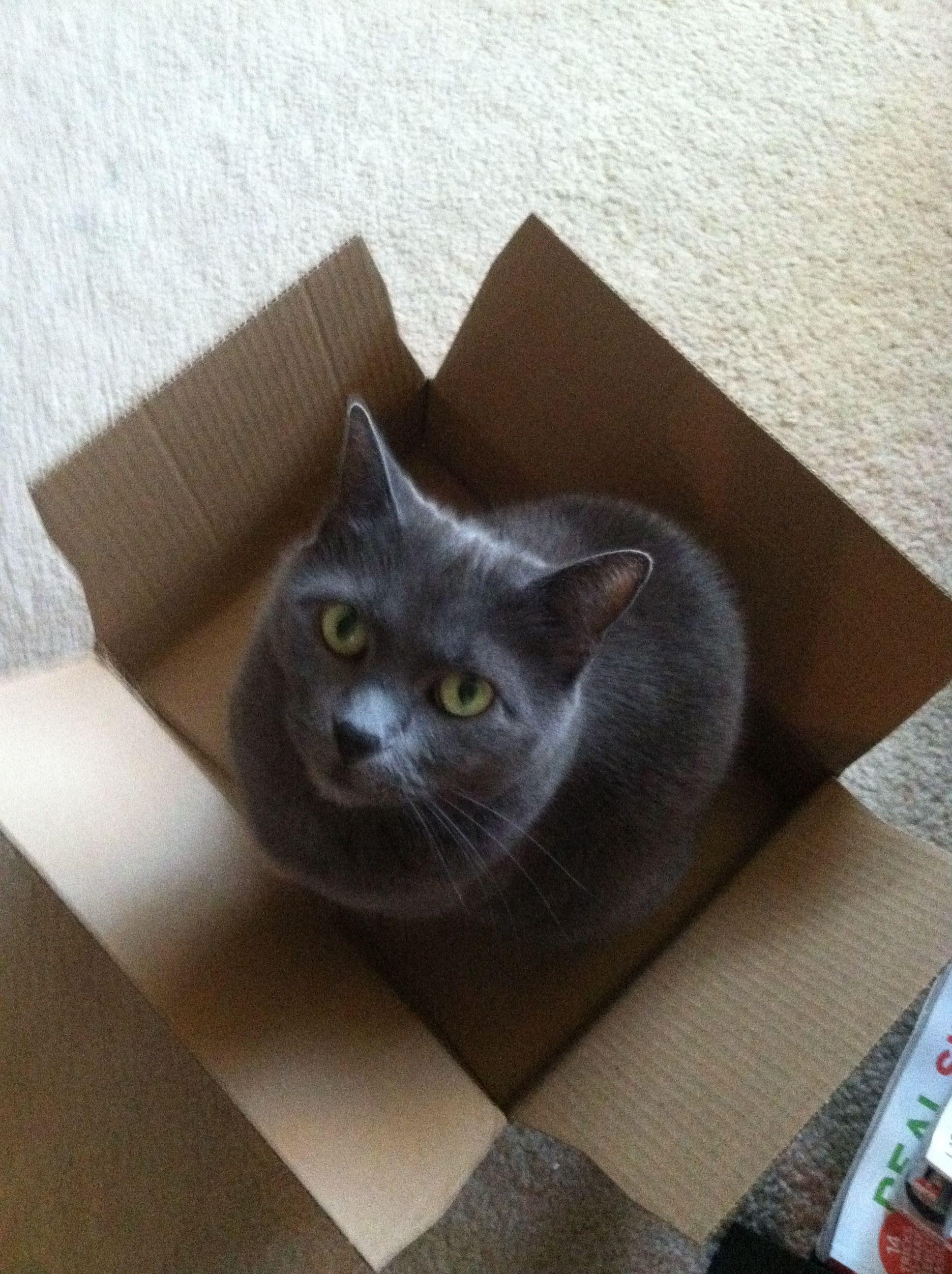 Cat In A Box Katze In Der Kiste Catinabox Cats Katzen Cats Cat Box Cat Love