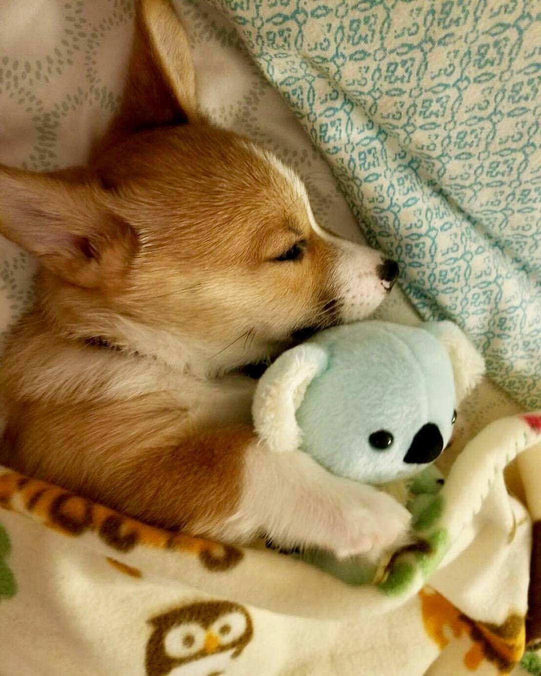 Картинки щенки милые и красивые спящие весь вечер