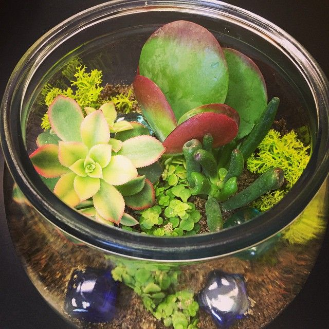 Sarah's getting ready for our terrarium workshop next Saturday! How much do you love this succulent garden!?