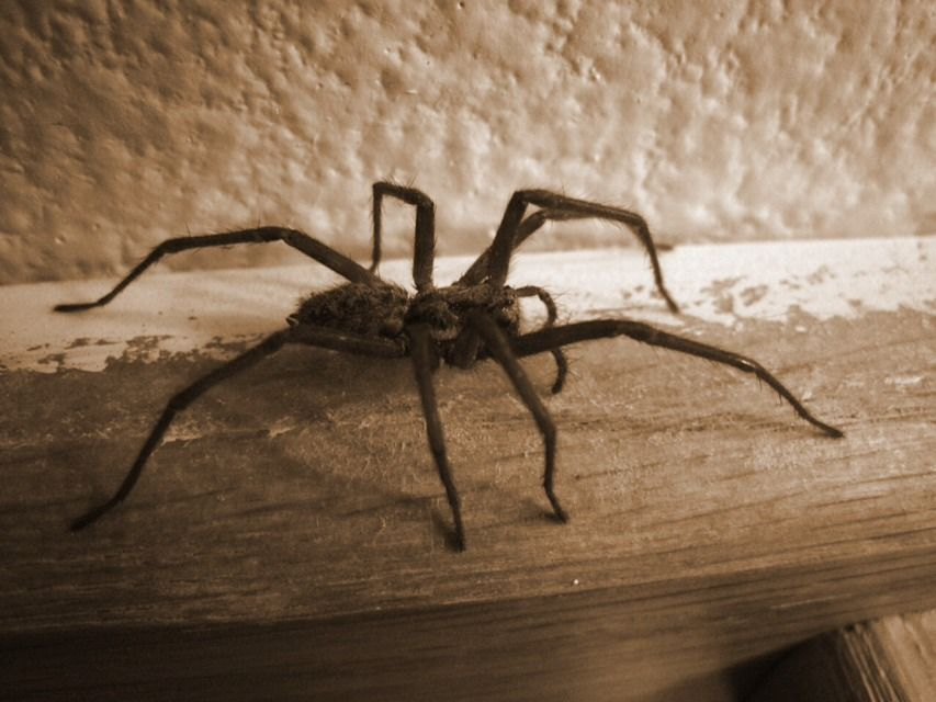 How to keep spiders out of your home natural spider