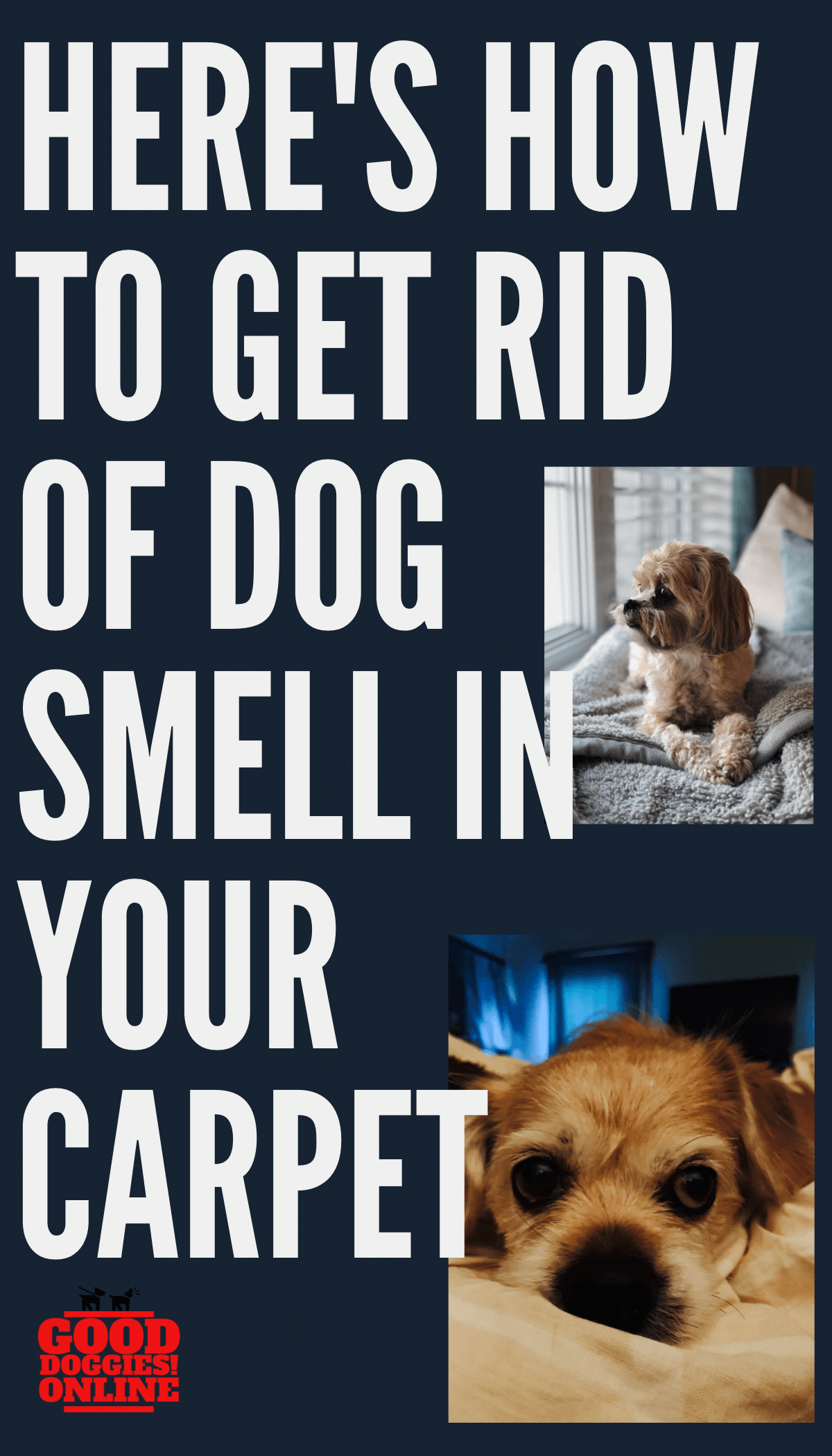 How To Get Dog Smell Out Of Carpet Good Doggies Online Dog Smells Pet Smell Good Doggies Online