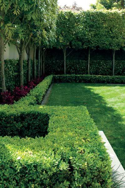 Garden: Pleached Titoki. Layering lawn, hedge, tall thin trees ...