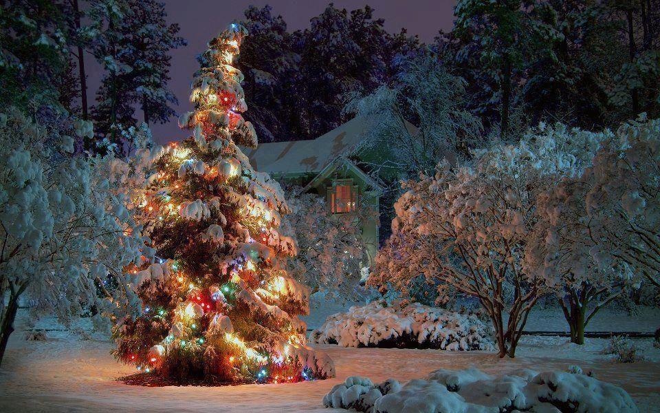 tired Christmas tree