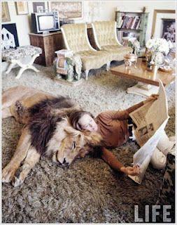 Dangerous Pet - Amazing Pet Lion