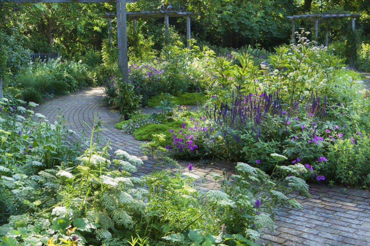 Sarah Price Landscapes Battersea Park Thrive Garden Design Beautiful Gardens Garden Shrubs