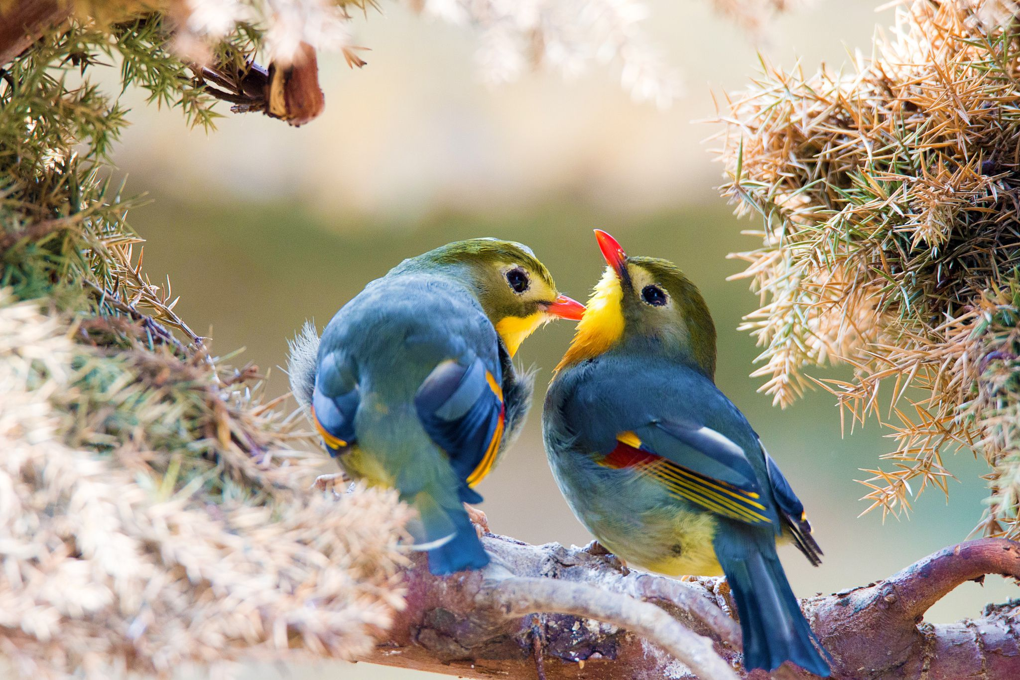 Photograph The bird of husband and wife by 烁 杨 on 500px