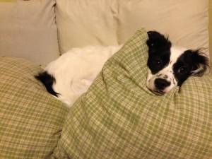 Columbus Oh Pets Classifieds Dog Craigslist Dogs Pets Pet