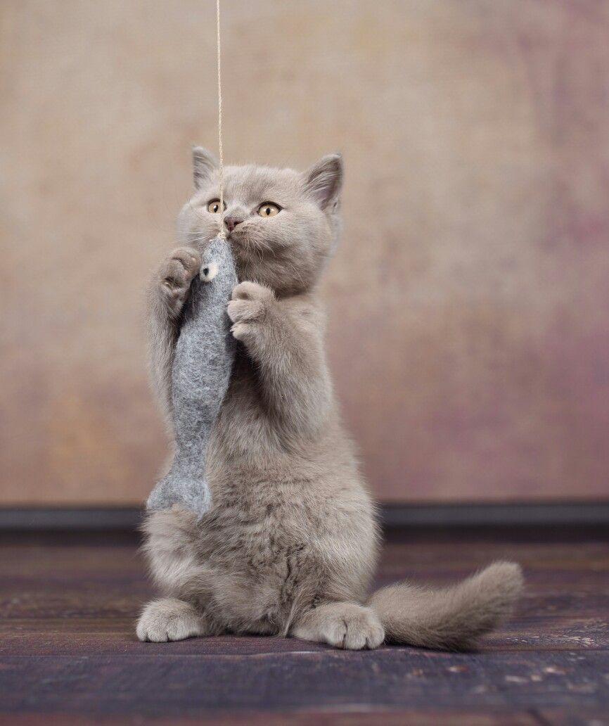 Pin Von Stylecats Auf Stylecats Katzenspielzeug Katzenspielzeug