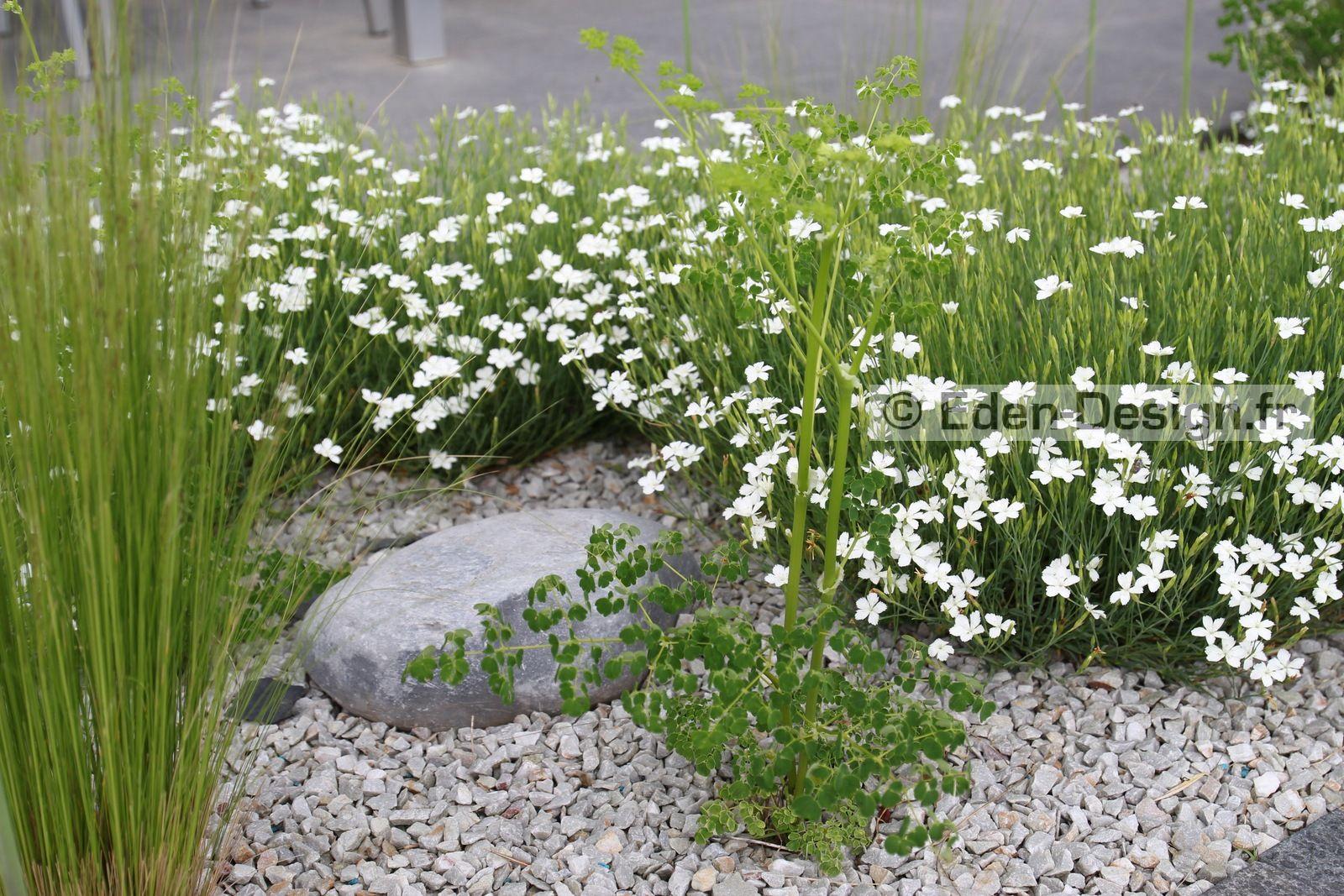 Massif De Plantes Sur Terrasse Graminees Vivaces Petit Jardin Zen