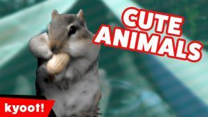 The Cutest Funniest Pet & Animal Home Video Bloopers of 2016 Weekly Compilation   Kyoot Animals  AFV's weekly compilation sequence carries on w ..  http://funnymovies.online/the-cutest-funniest-pet-animal-home-video-bloopers-of-2016-weekly-compilation-kyoot-animals/