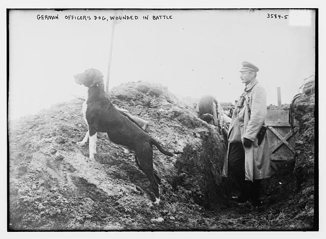 C.1914 German Officers Dog Wounded in War WWI Trenches
