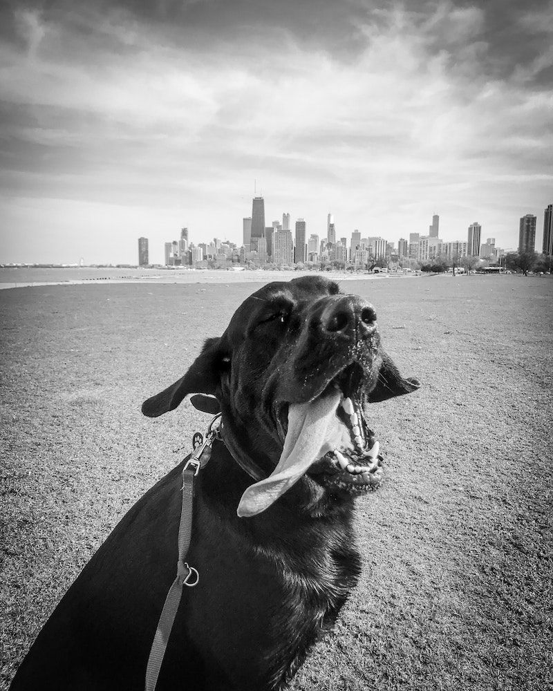 2019 New York City Dog Friendly Events Beautiful Dogs Popular
