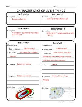 Worksheet Classification Of Living Things Worksheet 5th Grade classification of living things 6th grade google search search