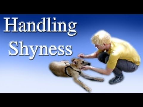 Handling Shyness I Love This Woman She S Reminiscent Of Victoria Stilwell Which I Like Better Than Dog Training Dog Clicker Training Therapy Dog Training