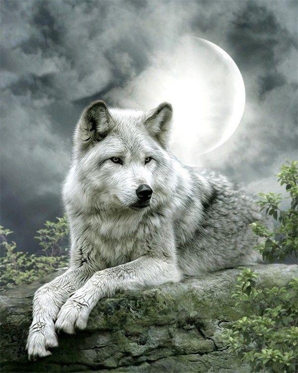 229 best Femme loup images on Pinterest | Loups, Belles