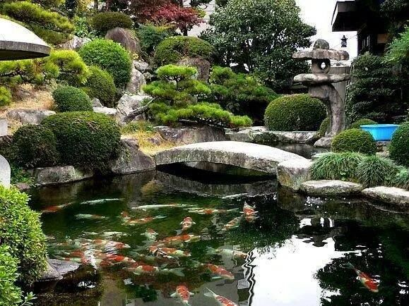 Gorgeous japanese garden koi pond water gardens ponds for Japanese koi water garden