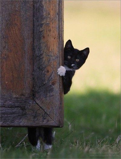Peek around the corner cat. #animal #cat...this one reminds me so much of my Lumpkin.  <3