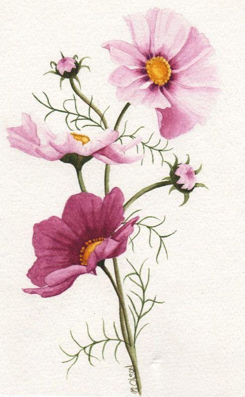 Mas Tamanos Pink Cosmos Flickr Intercambio De Fotos Flower Painting Flower Art Flower Drawing