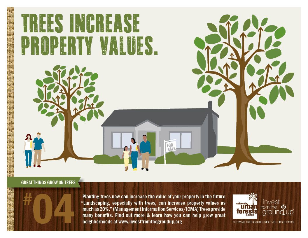 Planting trees now can increase the value of your property for How to increase home value
