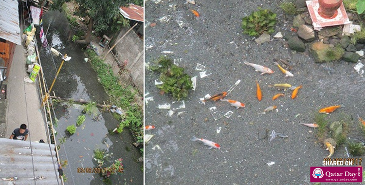 LOOK: A Dirty Creek in Iligan Becomes a Beautiful Koi Pond after the Locals Helped Out | Information | Blog | Qatar Day