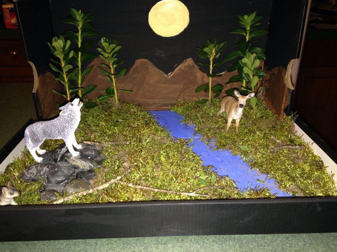 Shoebox diorama on the wolf | School projects | Diorama kids
