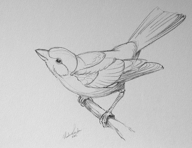 Simple Bird Line Art : How to draw a bird step by easy with pictures
